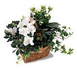 White Assortment Basket from Arthur Pfeil Smart Flowers in San Antonio, TX