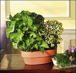 Green and Blooming Planter from Arthur Pfeil Smart Flowers in San Antonio, TX