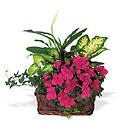 Azalea Attraction Garden Basket from Arthur Pfeil Smart Flowers in San Antonio, TX