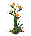 Bird of Paradise from Arthur Pfeil Smart Flowers in San Antonio, TX
